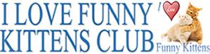 I LOVE FUNNY KITTENS CLUB