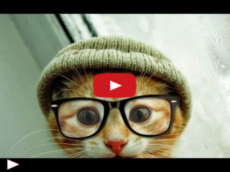 funny-cats-videos